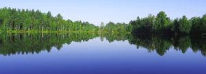 Header-Trees-along-Lake